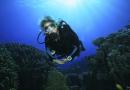 Kunstige stenrev skal trække dykkere til Storebælt