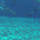 Ny træner til undervandsrugby i UV-KBH